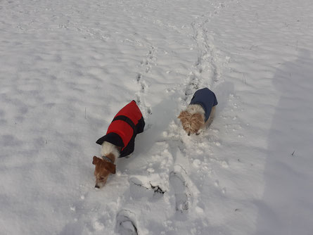 auch Isabela genießt noch die winterlichen Spaziergänge