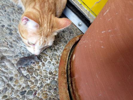 ich hab die Maus gefangen...und zwar eine echte - fressen tu ich sie nicht