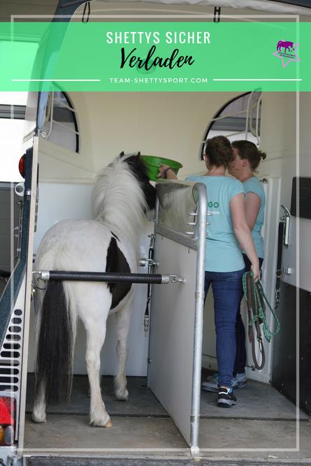 Umbau für Shettys im Pferdeanhänger, Shettys sicher transportieren und verladen