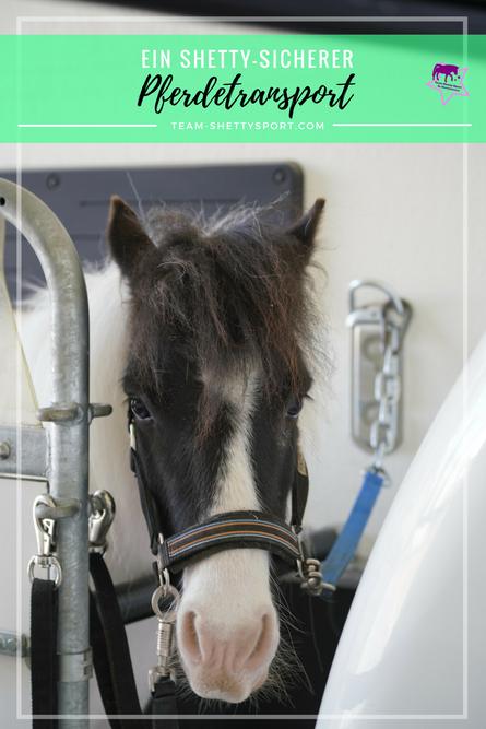 Shetlandponys sicher transportieren mit einem Umbau im Pferdeanhänger
