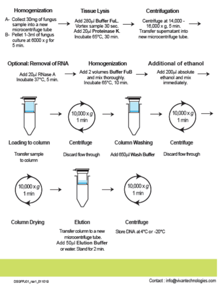 bacterial DNA purification Kit