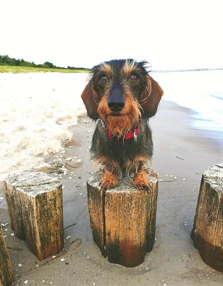 Urlaub mit dem Hund an der Ostsee in Prerow