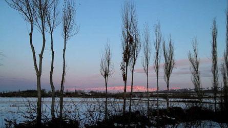 伊犁的冬日晨曦