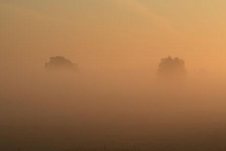 Mist boven de Lingewaardse uiterwaarden