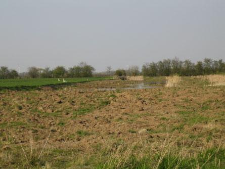 Foto April 2010: Blick vom Ackerdamm zum Wischdamm