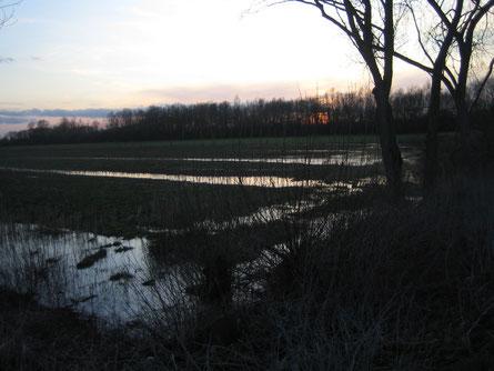 'Foto 3/2010 aufgenommen vom Limmerdamm in Richtung Westen