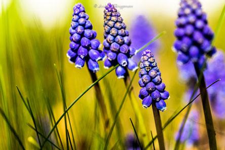blue spring-1    1/640 sek bei f/4.0 ISO 100, 100 mm