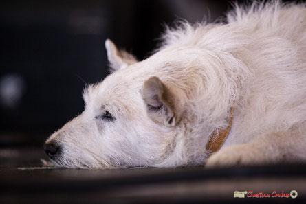 Jack, chien placide (13 ans) de Paul Kurkdjian, Gadjo & Co. Festival JAZZ360 2018, Camblanes-et-Meynac. Samedi 9 juin 2018