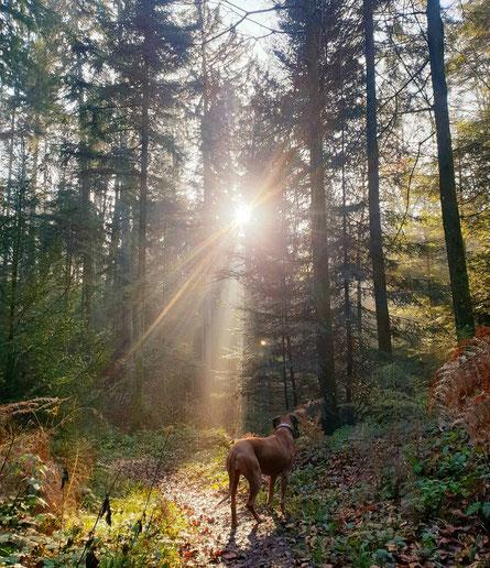 Waldspaziergang, Sonnenschein