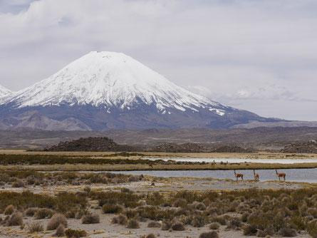 Lauca Nationalpark Chile