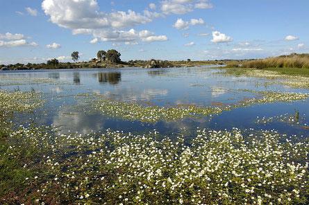 flacher See mit Wasserhahnenfuß in der Extremadura