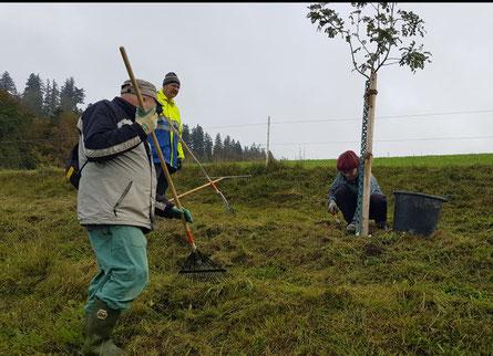 Diesmal besonders gefragt: Gras zusammenrechen und Baumscheiben ausjäten. Foto Robert Etter