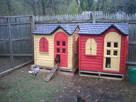 10 conseils pour g rer un poulailler dans un petit jardin site de lejardinressource. Black Bedroom Furniture Sets. Home Design Ideas