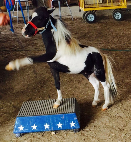 Mini Horse Camp Imagineahorse Com
