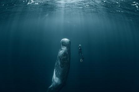 Tiefe, Wasser, Unbewusstes, tauchen, Selbsterfahrung, Selbstreflexion, Potentialentfaltung, Potential, Gruppenselbsterfahrung, Einzelselbsterfahrung