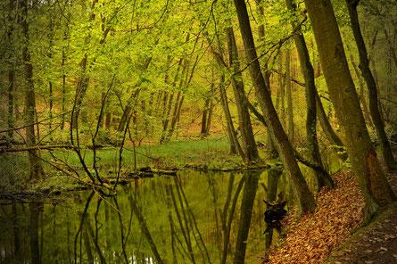Symbolbild: Naturschutzgebiet