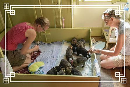 Onder het toeziend oog van mijn zus Wilma en nicht Marijn lebberen de pups in twee ploegjes hun aangelengde geitenmelk