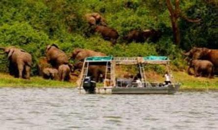 uganda-tours-uganda-gorilla-tracking.jpg
