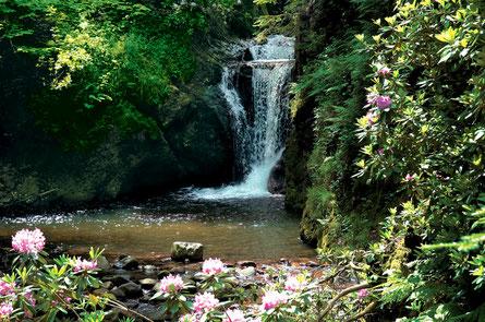 Teilansicht der Geroldauer Wasserfälle bei Baden-Baden, erleben Sie im Frühjahr die Rhododendren-Blüte entlang der Wasserfälle