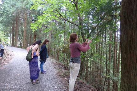 玉置神社 参道へ向かう道 生物多様性を感じながら