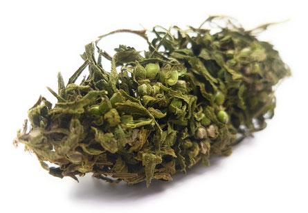 Cannabis Hanftee