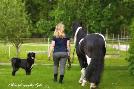 Pferdefotografie Syke Wiebke Heye