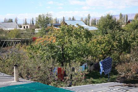 Garten, Guesthouse Tamchy, Issyk-kul