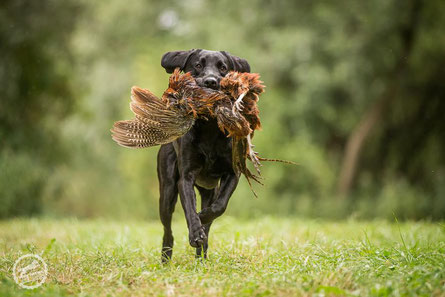 Foto: Hundeschule TeamSein