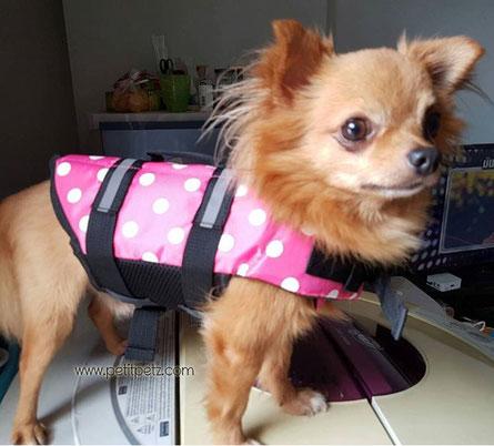 chaleco salvavidas cachorros