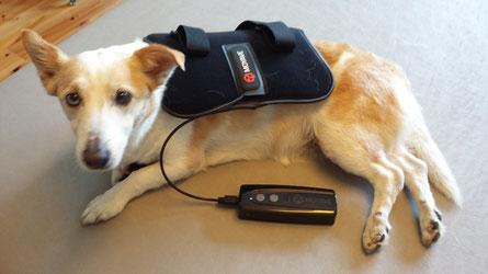 Lucy bekommt eine schmerzlindernde Therapie für die Schultergürtelmuskulatur