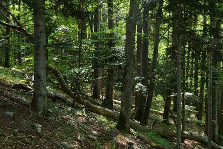 Waldreservat Chalmbrunnen,       Foto: Michael Zemp