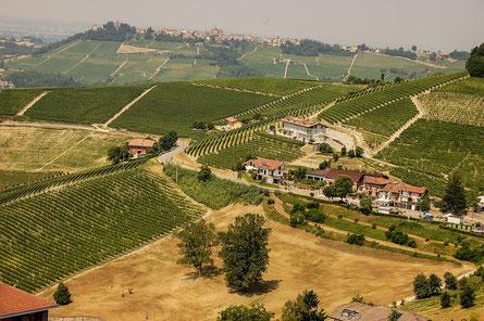 Die bekanntesten Trüffelregionen sind Spanien, Italien (Piemont, Toskana, Alba), Frankreich (Périgord) und Kroatien (Istrien)
