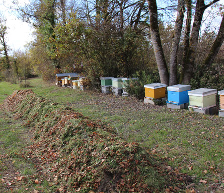 Rucher - Permaculture