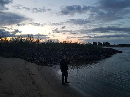 Abendstimmung am Fluß. Benny auf Zander-Jagd