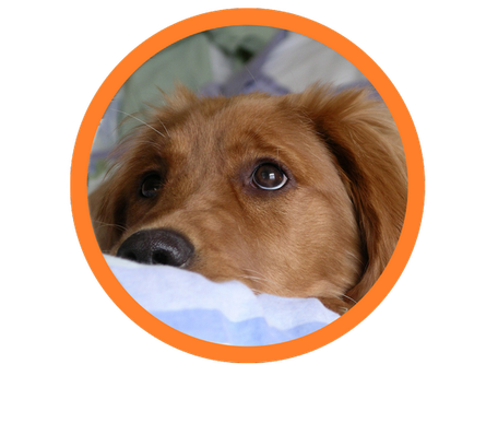 Therapiehund aus Bayern bei der Pause mit seinem Therapiehundertrainer bei der Therapiehundeausbildung. . Nach gründlicher Therapiehundeausbildung durch einen Assistenzhundetrainer, kam der Therapiehund zu seinem Team-Parnter. Therapiehunde für Kinder.