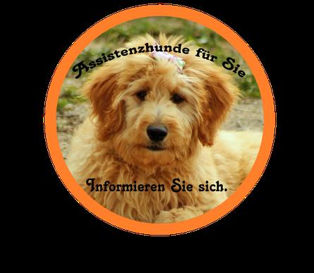 Assistenzhunde, Kosten der Assistenzhundeausbildung, Assistenzhunde für Kinder, in Deutschland in Österreich und in der Schweiz,sowie im gesamten deutschsprachigem Raum