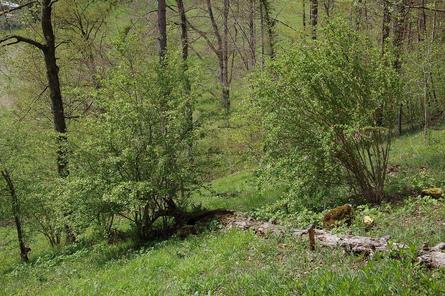 Die Stapflenreben,  Naturschutzgebiet von Ettingen  im April     Foto: Michael Zemp