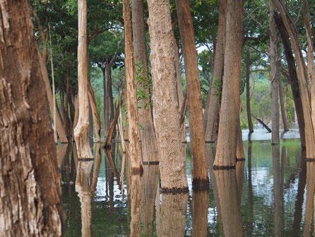 Bäume im Wasser am Amazonas