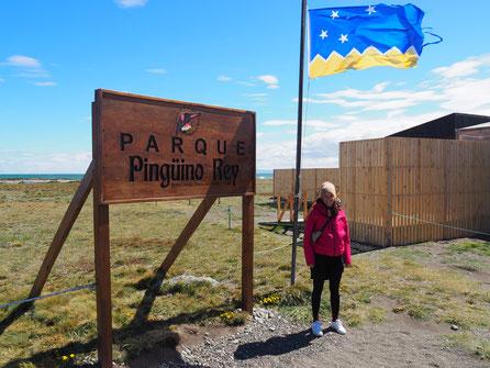 Der Parque Pingüino Rey, die einzige Kolonie von Königspinguinen außerhalb der Antarktis