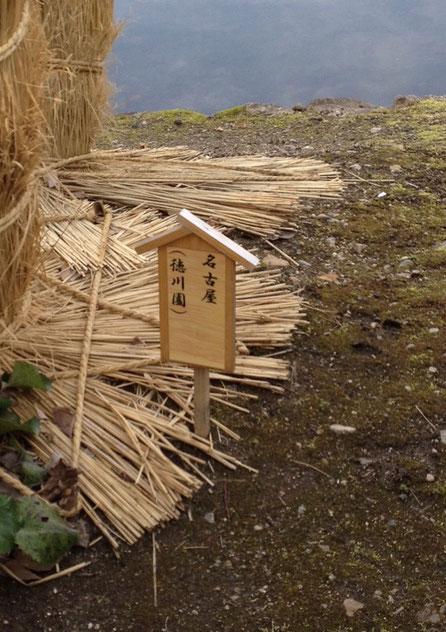 ソテツの冬養生 コモも巻きの仕方 名古屋 徳川園