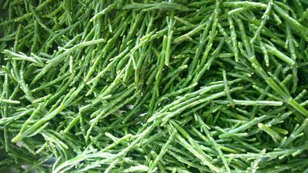 Salicorniha,Gemüse,Legumes,Vegetables,Martins-Kulinarium,Carvoeiro,Algarve,Portugal