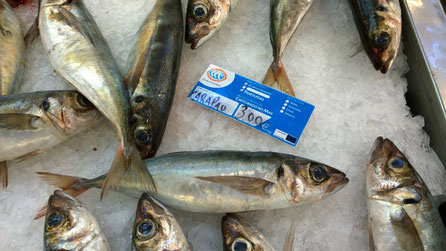 Carapau,Fisch,Peixe,Fish,Martins-Kulinarium,Carvoeiro,Algarve,Portugal