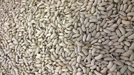 Weisse Bohnen,Feijão Branco,White Beans,Gemüse,Legumes,Vegetables,Martins-Kulinarium,Carvoeiro,Algarve,Portugal