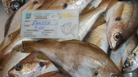Faneca,Fisch,Peixe,Fish,Martins-Kulinarium,Algarve,Portugal