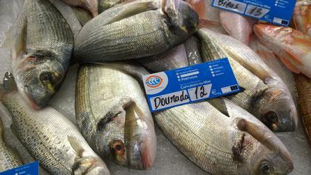 Dourade,Seabass,Fisch,Peixe,Fish,Martins-Kulinarium,Algarve,Portugal