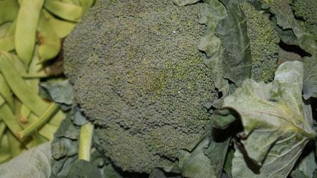 Brokkolie,Gemüse,Legumes,Vegetables,Martins-Kulinarium,Carvoeiro,Algarve,Portugal