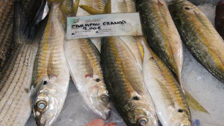 Carapau-Francés,Fisch,Peixe,Fish,Martins-Kulinarium,Carvoeiro,Algarve,Portugal