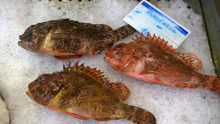 Drachenkopf,Rascasso,Scorpionfish,Fisch,Peixe,Fish,Martins-Kulinarium,Algarve,Portugal