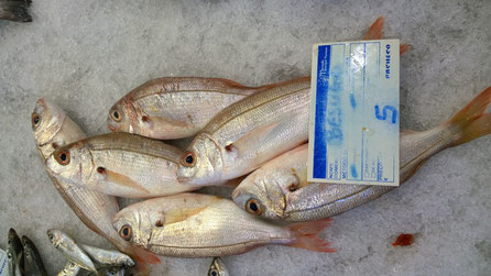 Besugo,Fisch,Peixe,Fish,Martins-Kulinarium,Algarve,Portugal