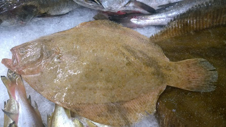 Scholle,Solha,Sole,Fisch,Peixe,Fish,Martins-Kulinarium,Algarve,Portugal